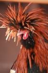 Of Rooster Dude and NinjaChicken